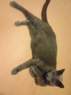 美ネコなカリン