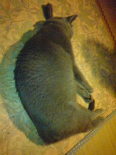 クーラー猫