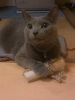 美猫カリン