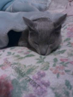 カリンの寝顔
