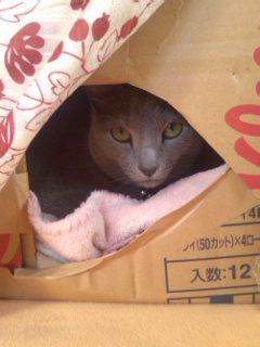 久しぶりに箱ネコ