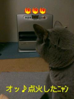 猫に指図されるアタシ