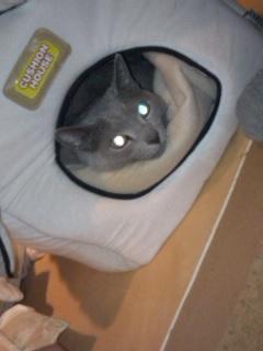 明け方の宇宙猫