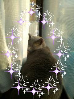 窓辺のピチピチ猫
