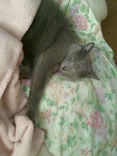 ピンクの毛布
