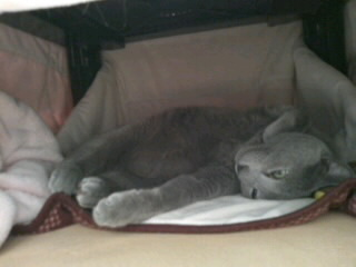 カリンの昼寝