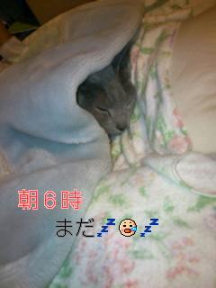 朝☆カリン