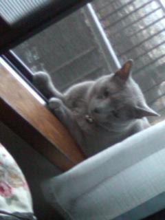 窓辺に涼み猫