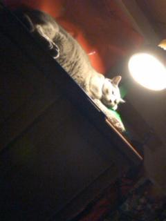 猫、保温中