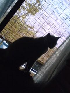 窓辺のカリン