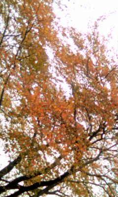 身近な秋らしさ