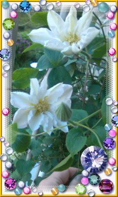 10年目の『母の日』の花