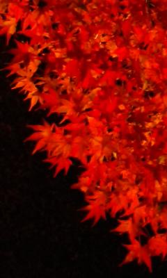 山中湖の紅葉祭り