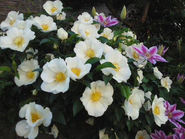 きれいな花に…