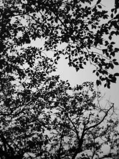 桜の下から…