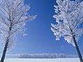 青と白の世界